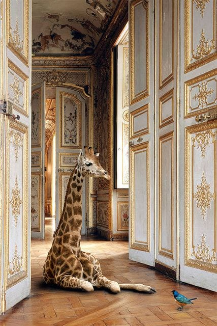 Photography by Karen Knorr
