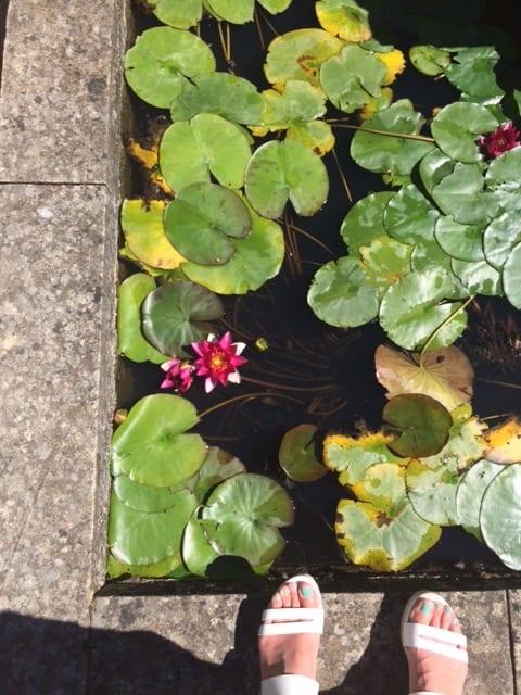 Rug or pond