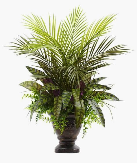 Mixed Areca Palm Fern & Peacock with Planter